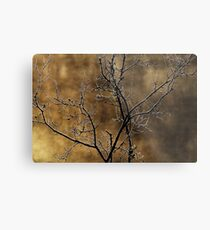 In the light of an autumn morning Metal Print