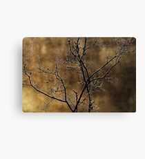 In the light of an autumn morning Canvas Print