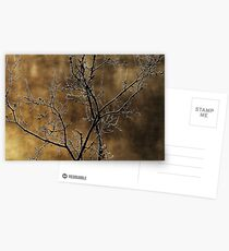 In the light of an autumn morning Postcards