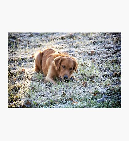 Frosted dog Photographic Print