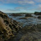 Piddock Rock at Campus Point by Brian Haidet