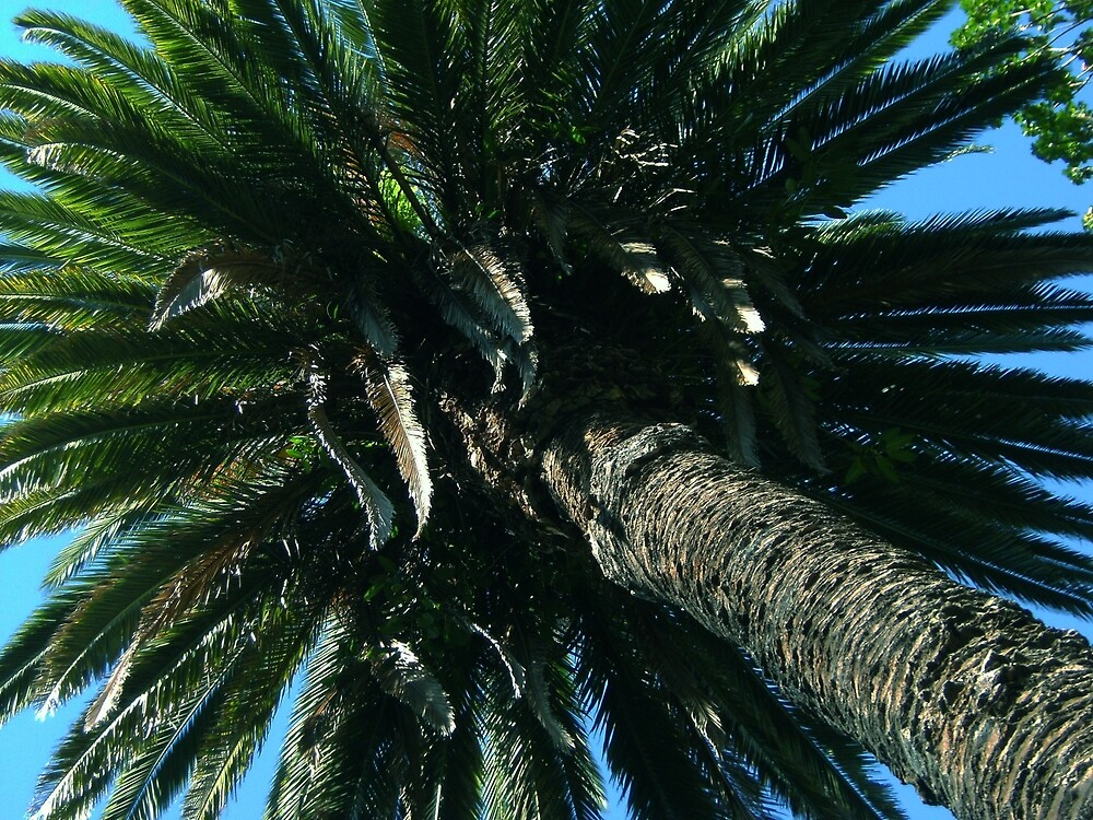 Palm Tree by cadellin