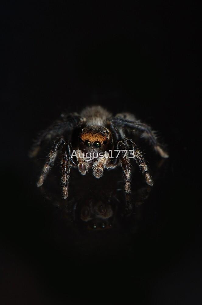 Money Spider by August1773