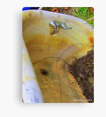 Leaf Bath Canvas Print