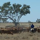 Cattle droving on the outskirts of Longreach by DashTravels