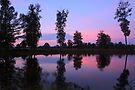 Morning Glory by Jo Nijenhuis
