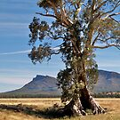 Cazneaux Tree, Wilpena, Flinders Ranges, SA. by johnrf