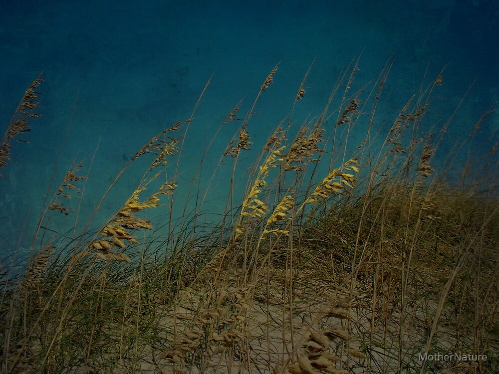 Sea Oats and Storms by MotherNature