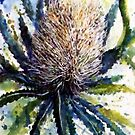 Banksia by pamfox