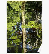 Cypress Reflection in Water Poster