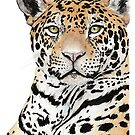 Jaguar by Meaghan Roberts