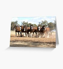 Beautiful Clydesdale Team.... ploughing ..... Greeting Card