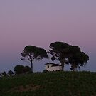 Dusk on the Camino by Richard McCaig