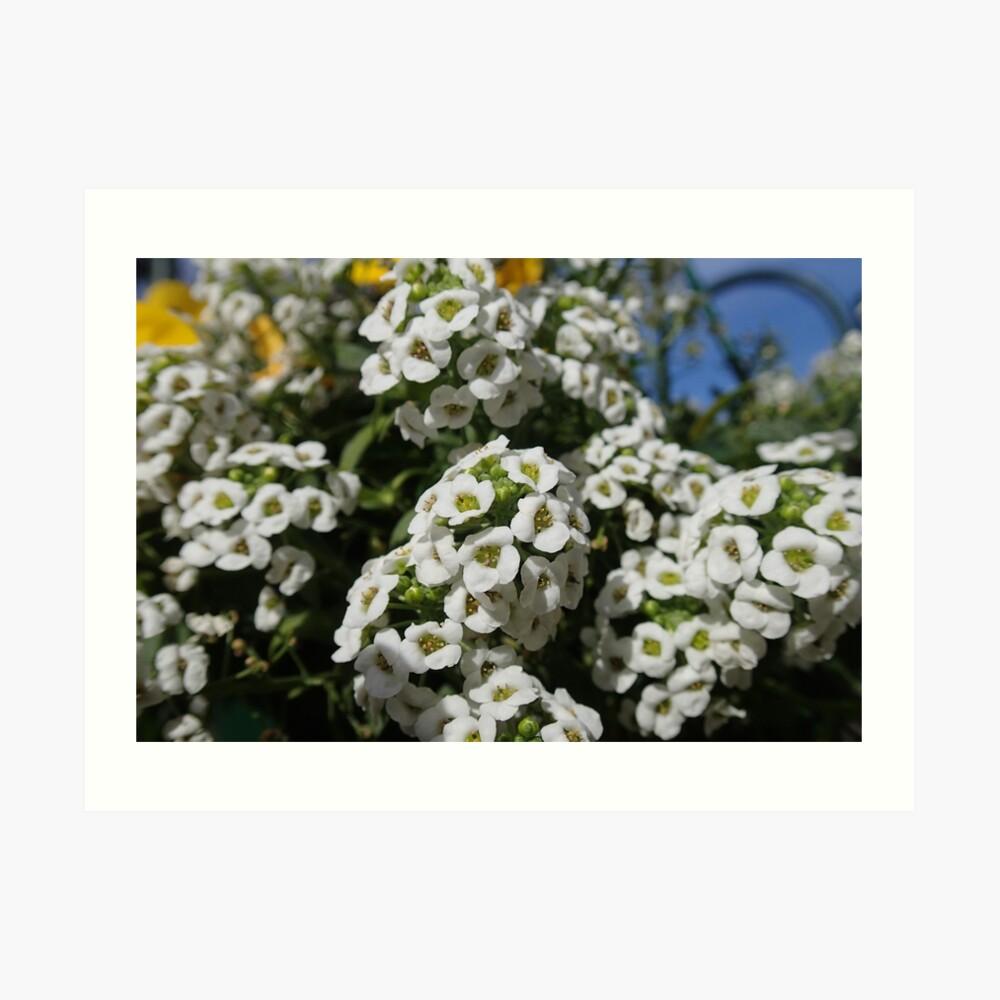 Pequeñas flores en Floriade Lámina artística