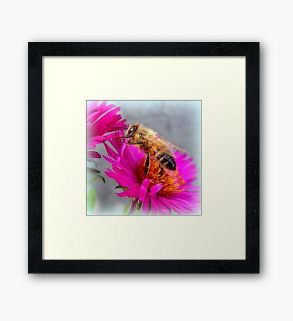 Wandering Bee Framed Print
