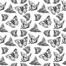 butterflies black and white by Lara Wolf