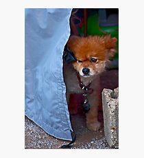 Mad dog Photographic Print
