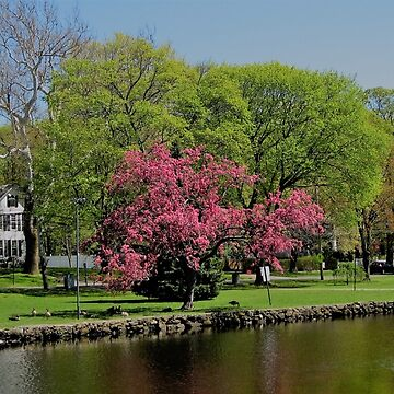 Early Spring in Connecticut by oldfool148
