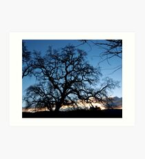 Evening Oak Art Print