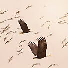 Weißkopfseeadler und Seemöwen von Peggy Collins