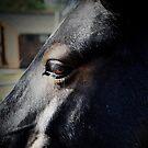 Black Horse by mpstone