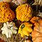 PUMPKINS/GOURDS FALL DISPLAYS IN THE BACKYARD