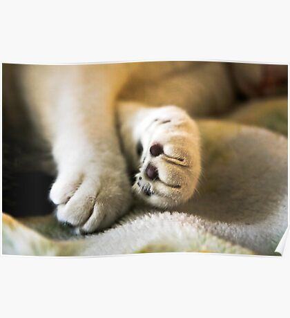 Sophia's Peaceful Paws Poster