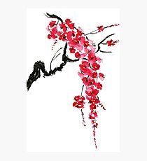Pink flowers of sakura  Photographic Print