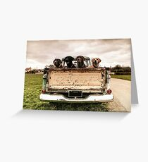 labradors in a chevy truck Greeting Card