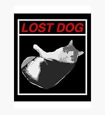 Lost Dog Photographic Print