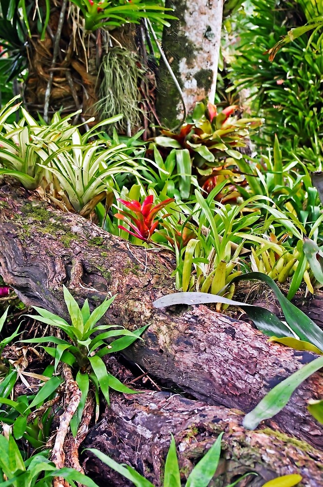 Tropical Fernery Nook by TonyCrehan
