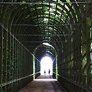 Tunnel of Light, Hampton Court, London. by David Dutton