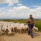 Shepherd and flock by Richard McCaig