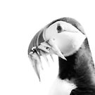 Puffin on White by George Wheelhouse