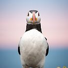Puffin Sunset by George Wheelhouse