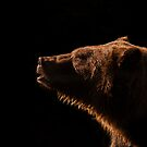 Back-lit Grizzly by George Wheelhouse