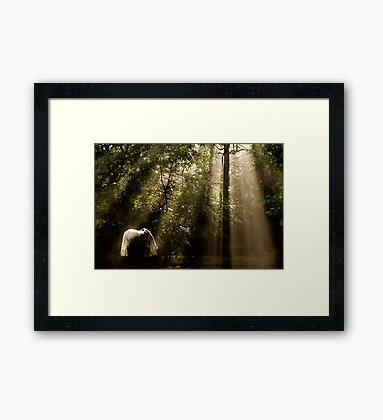 Horse In The Mist - Tranquility 2 Framed Print