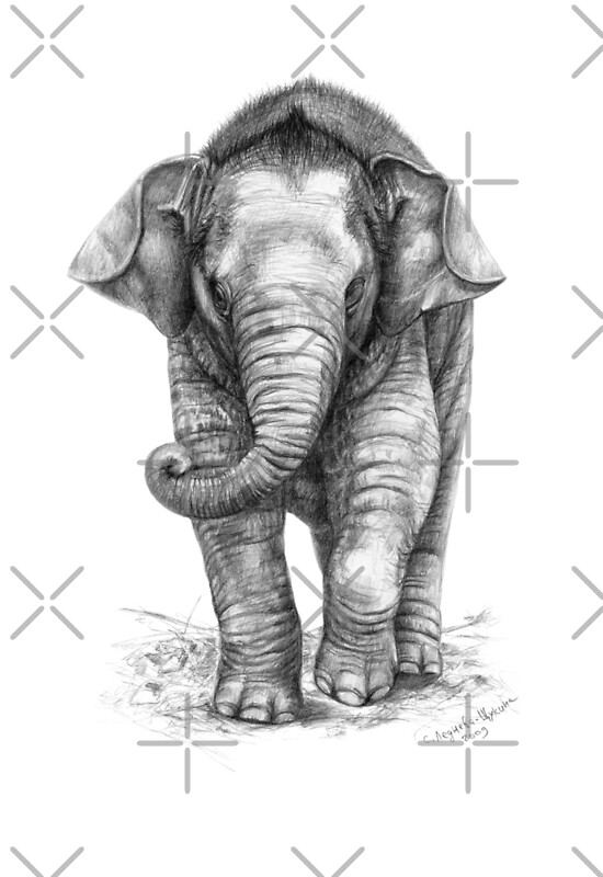 Quot Baby Elephant G046 Quot Art Prints By Schukinart Redbubble