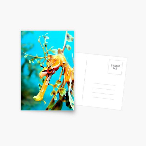Leafy Seadragon Face Postcard