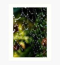 Spider Web Dew Art Print