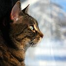 My sweet girl looking out  the fresh snowfall from the last storm by jodi payne