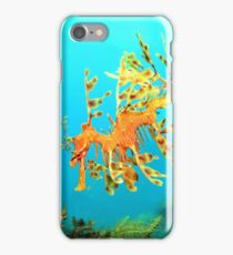 Leafy Seadragon Descending iPhone Case/Skin