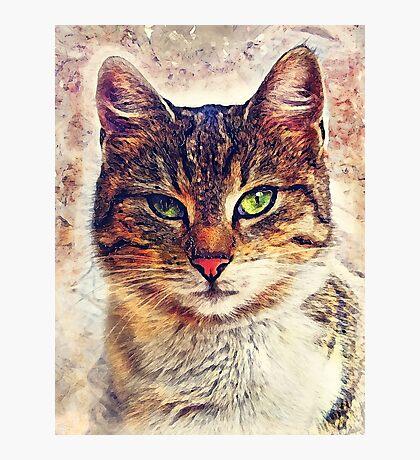 Cat Saba Photographic Print