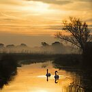 Swans and Pevensey Levels Dawn by Sue Robinson