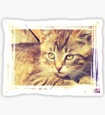 Retro Kitten Photo 2 Sticker