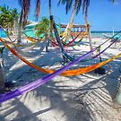 Caye Caulker Hammocks, Belize by David Galson