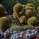 Barrel Cactus by David Galson