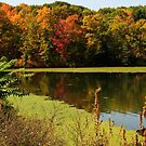 Autumnal colours in upstate New York by Sue Leonard