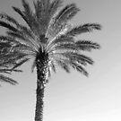 Date Palm by Donna Adamski