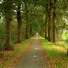 Country Road, Start of Fall by ienemien
